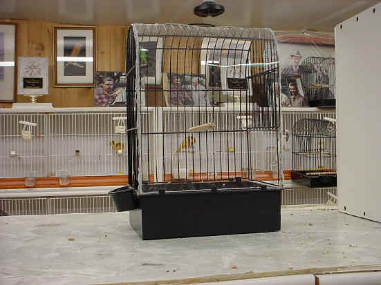 Yorkshire Canaries For Sale Yorkshire Canary Show Cage